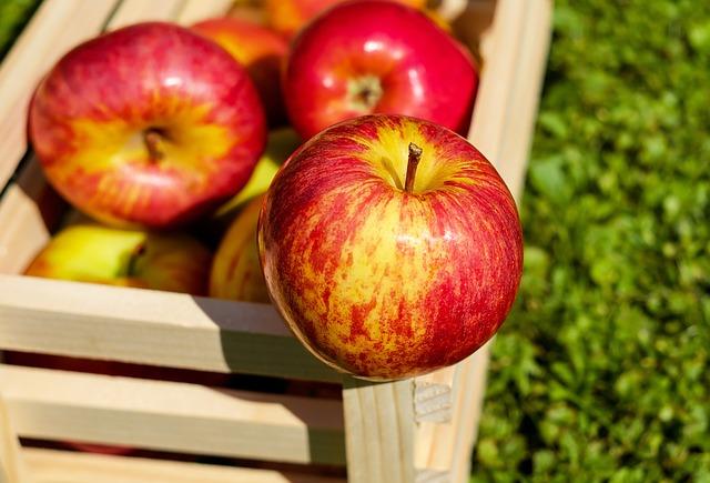 S čerstvých jabĺk sa pripraví väčší objem kvasu.