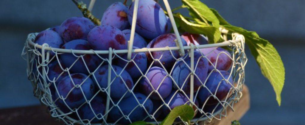 Slivky na kvas, dovoz od 1 000 kg.
