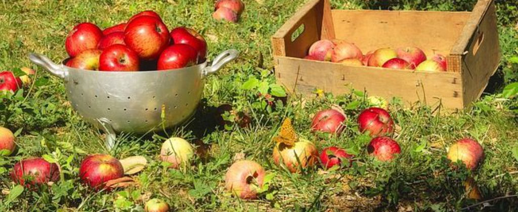 ovocie-jablka
