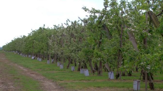 Ovocinári na jar zachraňovali, čo sa dalo