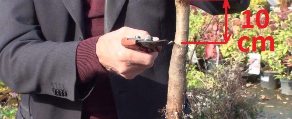 Ivan Hričovský, ako postupovať pri výsadbe ovocných stromov.