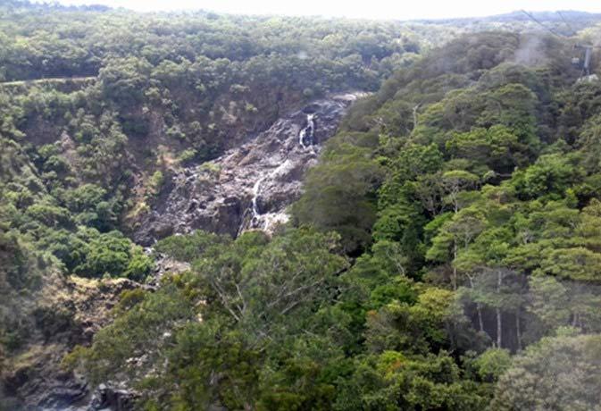 Nad divočinou austrálskeho dažďového pralesa.