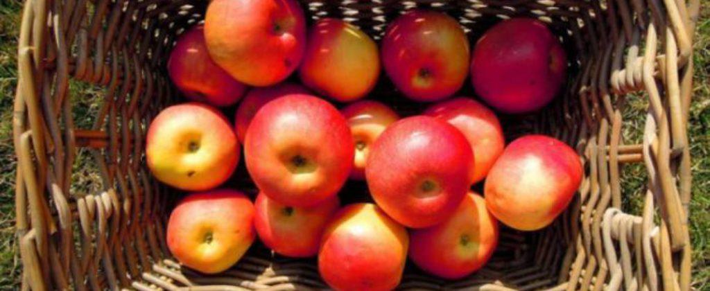 Jablká na kvas.
