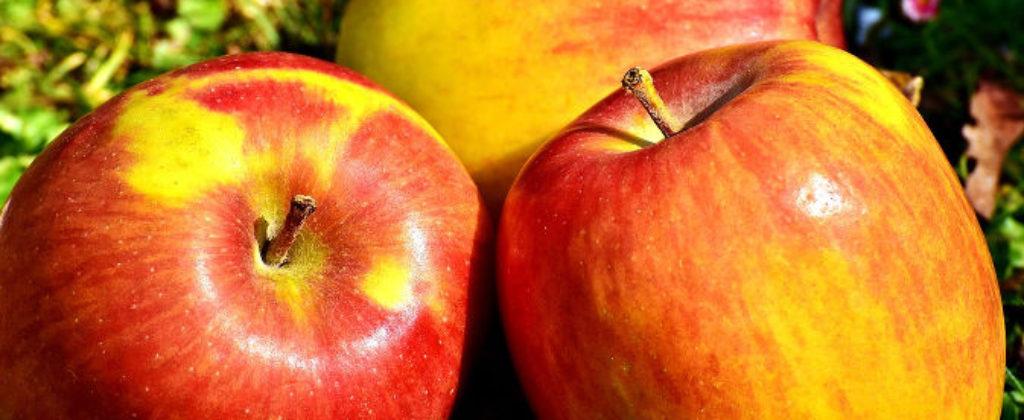Jablka-kvasinky-palenice-kvasenie