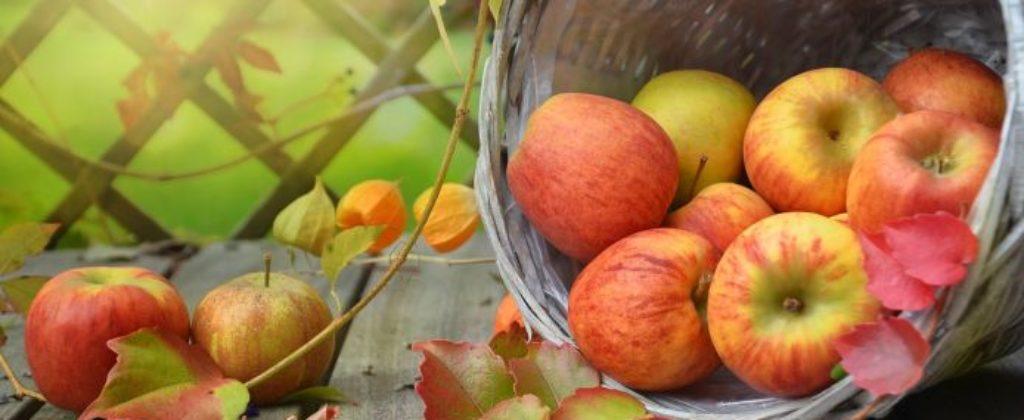Jablká na kvas
