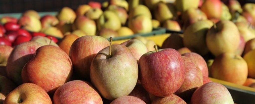 ovocny-sad